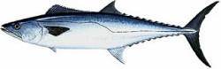 Вред морепродуктов